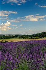 Preview iPhone wallpaper Farm, lavender field, trees, clouds