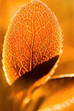 Preview iPhone wallpaper Foliage macro photography, sunshine, backlight