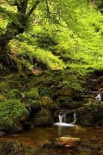 Forest, moss, stones, creek