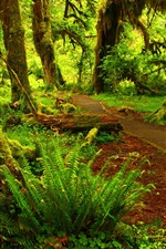 Preview iPhone wallpaper Forest, moss, trees, path, green