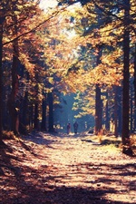 Preview iPhone wallpaper Forest, road, person, sunshine, autumn