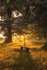 Preview iPhone wallpaper Forest, trees, grass, bench, dawn, sunrise