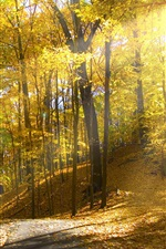 Preview iPhone wallpaper Forest, trees, path, yellow leaves, sunshine, autumn