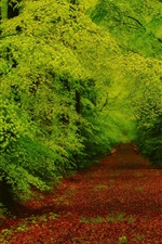 Preview iPhone wallpaper Forest, trees, path