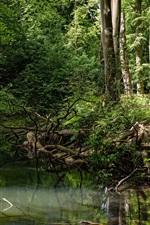 iPhone обои Лес, деревья, ручей, вода
