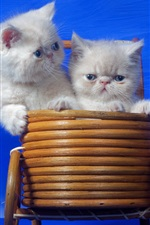 Funny cats, kitten sit in baby carriage