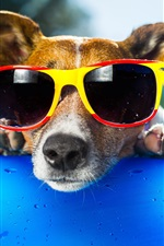 Preview iPhone wallpaper Funny dog, sunglasses, face, duck toy