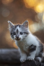 Furry kitten, fence, bokeh, blurry