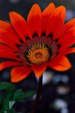 Preview iPhone wallpaper Garden flowers, orange petals