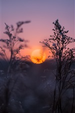 Grama ao pôr-do-sol, crepúsculo, embaçada