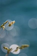 Preview iPhone wallpaper Grass, bokeh, light