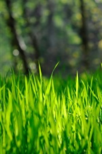 Grass, green, bokeh, nature