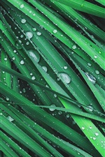 Preview iPhone wallpaper Grass, green leaves, dew, water drops