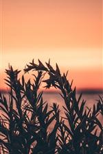 Grass, plants, sunset, red sky