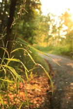 Preview iPhone wallpaper Grass, sunlight, road, trees, morning