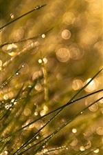 Preview iPhone wallpaper Grass, sunshine, dew, glare