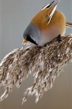 Preview iPhone wallpaper Grass, tit, bird