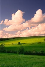 Grassland, trees, clouds