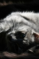 Preview iPhone wallpaper Gray kitten sleep, look at you, black background