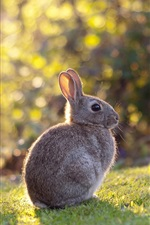 Preview iPhone wallpaper Gray rabbit, hare, grass, sunshine