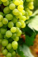 Preview iPhone wallpaper Green grapes, fruit, harvest