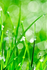 Preview iPhone wallpaper Green grass, dew, water drops