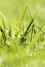 Preview iPhone wallpaper Green grass, light circles, summer
