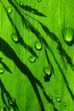 Green leaf, water drops, light