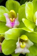 Preview iPhone wallpaper Green petals orchid