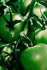 Preview iPhone wallpaper Green tomatoes, unripe