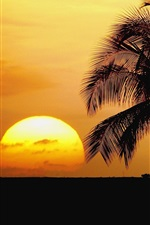 Preview iPhone wallpaper Hawaii, beach, sunrise, palm trees