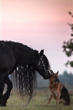 Preview iPhone wallpaper Horse and German shepherd, friendship