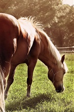 Preview iPhone wallpaper Horse eat grass, back view