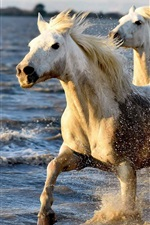 Preview iPhone wallpaper Horses running in water, splash