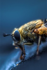Preview iPhone wallpaper Insect, bee, macro photography