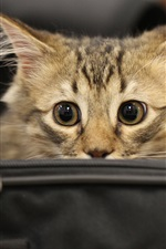 Preview iPhone wallpaper Kitten in bag, look, face, eyes