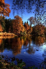 Preview iPhone wallpaper Lake, trees, autumn, birds