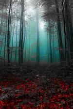 iPhone fondos de pantalla Mañana, bosque, árboles, niebla