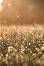 Preview iPhone wallpaper Morning, grass, dew