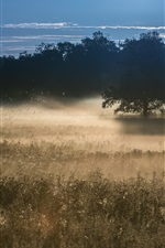 Morning, grass, trees, fog