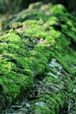 Moss close-up, forest