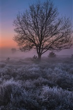 Preview iPhone wallpaper Netherlands morning, trees, grass, fog, sky