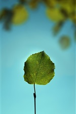 Preview iPhone wallpaper One leaf close-up, blue background