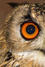 Preview iPhone wallpaper Owl front view, face, eyes