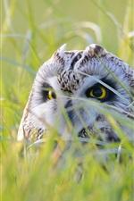 Preview iPhone wallpaper Owl hidden in grass, look