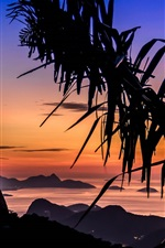 Preview iPhone wallpaper Palm trees, Rio, night, lights, red sky