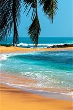 Palmeiras, mar, pedras, praia