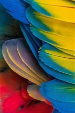 Preview iPhone wallpaper Parrot colorful feathers close-up