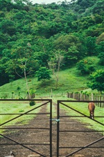 Preview iPhone wallpaper Pasture, gate, fence, grass, trees, horse