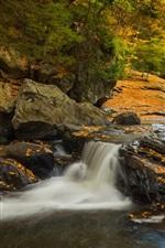 Pennsylvania, Ohiopyle State Park, forest, trees, creek, autumn